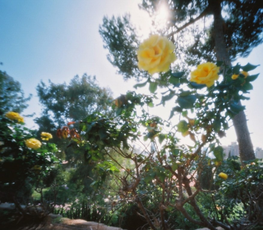 Kodak Portra 160, Zero Image 2000