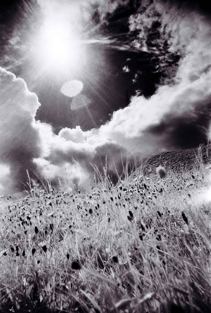 Fatso IR - Infrared photography with the Superheadz UWS and Rollei Infrared 400 - backlit grassy