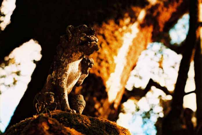 Burnt guardian - Shot on Wittner Chrome 200 (Agfa RSX200) at EI 200. Color reversal (Slide) film in 35mm format.