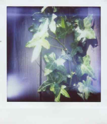 Diana Instant Square - Close-up lens - Ivy