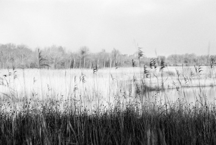 ILFORD Delta 400 Professional / 35mm, Canon EOS 5. Northwich, UK. December 2017