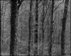 Woodlands, Apo-Ronar 300mm, Fomapan 100 in Rodinal 1+50