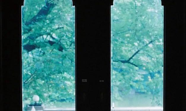 5 Frames With… CineStill Tungsten 800 (35mm / EI 800 / Minolta X-700) – by Mila Galinova