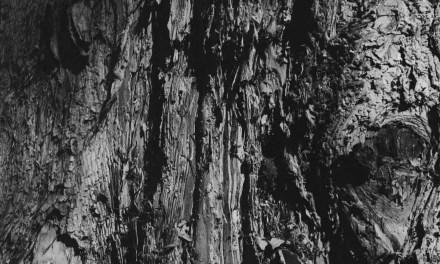 Flow – Shot on Kodak Tri-X 400 at EI 51200 (120 format)