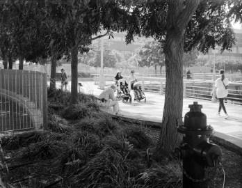 Kodak Portra (EI 400 - 4x5) - Cameradactyl 4x5)