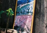 Street art - Shot on Fuji Superia 400 Premium at EI 400. Color negative film in 35mm format.