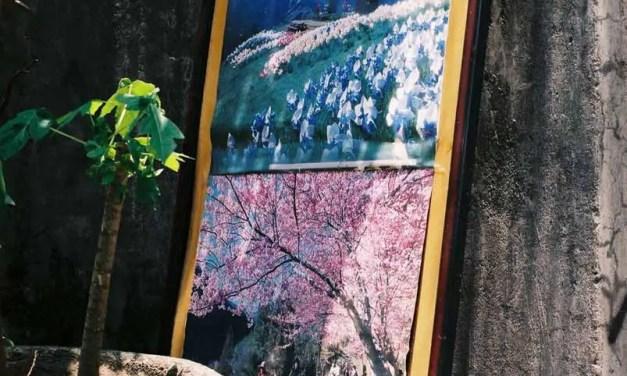 Street art – Shot on Fuji Superia 400 Premium at EI 400 (35mm format)