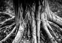 Stumps #01 - Shot on Bergger Pancro 400 at EI 200. Black and white film in 4x5 format. Graflex Pacemaker Speed Graphic. Kodak Aero Ektar 178mm f/2.5. Orange #21 filter.