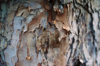 1000 layers - Shot on Lomography Color Negative 800 at EI 800. Color negative film in 35mm format. Nikon FM3A / Nikkor 50mm f/1.2 AI-S.