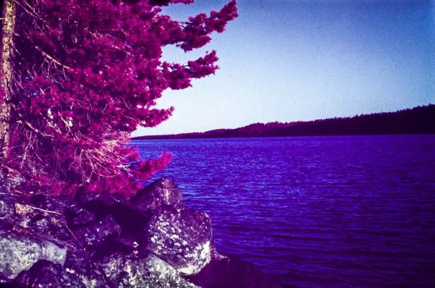 Kodak EKTACHROME Infrared EIR