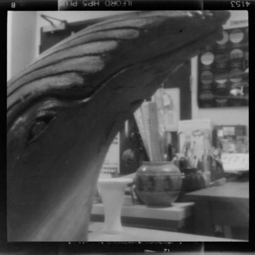 ILFORD HP5 PLUS - Ceramic Humpback Whale