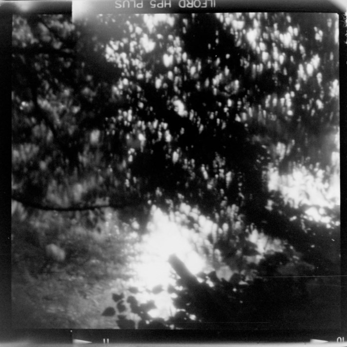 ILFORD HP5 PLUS - Up Through The Boughs