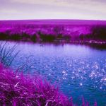 5 Frames With… Lomography LomoChrome Purple XR 100-400 (EI100-400 / 35mm / Nikon FE) – by Sherry Christensen
