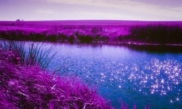 5 Frames With… Lomography LomoChrome Purple XR 100-400 (EI100-400 / 35mm / Nikon FE) – by Sherry Christensen
