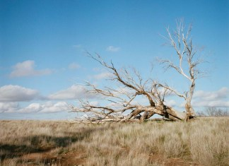 Nick Orloff - My Return to Film