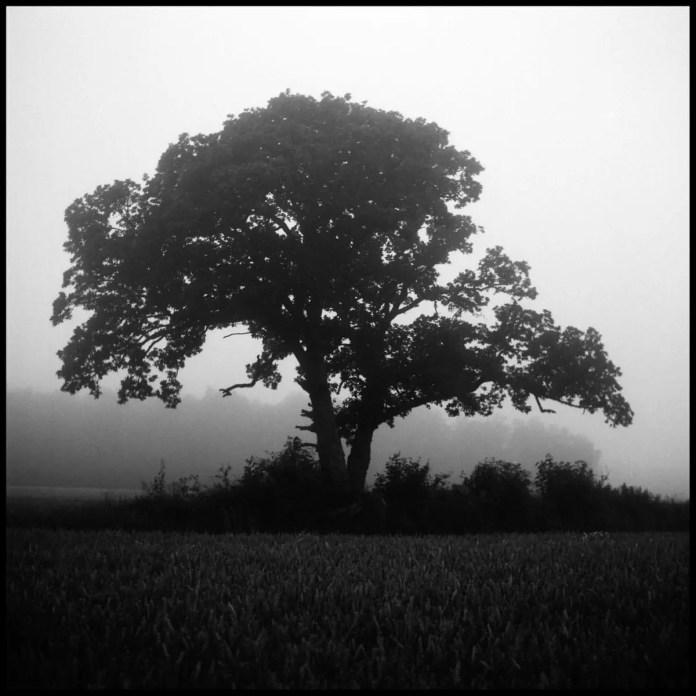In the mist, Gotland - Yashica Mat-124 - Kodak Tri-X 400