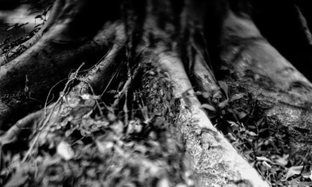 Stumps #02 – Shot on Bergger Pancro 400 at EI 200 (4×5 format)