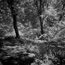 Hasselblad 903 SWC images - Forest - ILFORD Delta 100 Professional