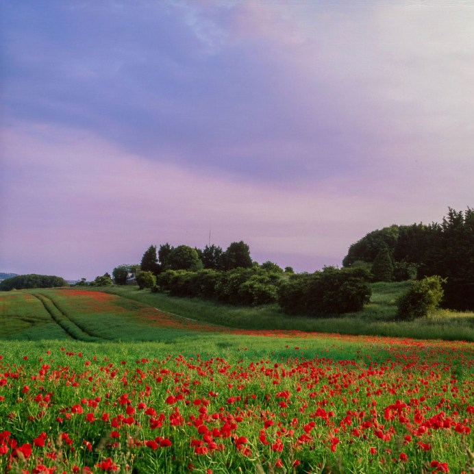 Ditchling Beacon; This image is perfect for Fuji Velvia 50 as it contains only three colours with almost no variation in tint.