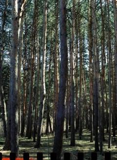 5 Frames With... Kodak VISION3 250D 5207 (EI 200 : 120 : Pentax 645N) - Sergey Dozhdikov