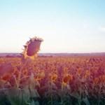 5 Frames With… Yodica Antares (EI 100 : 35mm : Olympus MJU II) - by Matt Murray