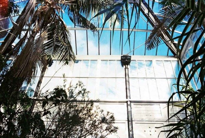 Lucy WainWright - Buxton Palm House, UK