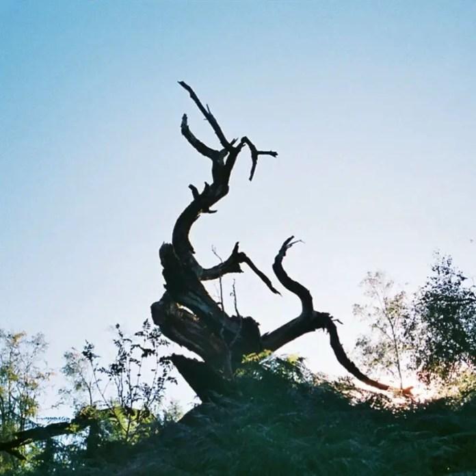 Lucy Wainwright - Spooky Tree in Derbyshire, UK