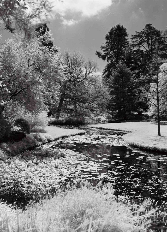 Botanical Gardens of Dublin - Rollei Infrared 400 (R72 Filter), Zenzanon 75mm f/2.8