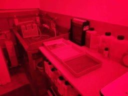 My darkroom - trays