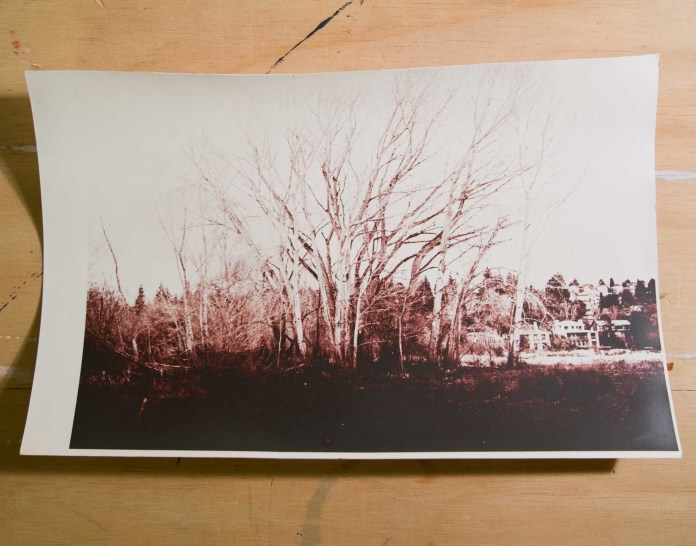 Toned in Fotospeed Sepia toner (thiourea-based), bleached slightly too much. I guessed the NaOh content, approx 10ml.