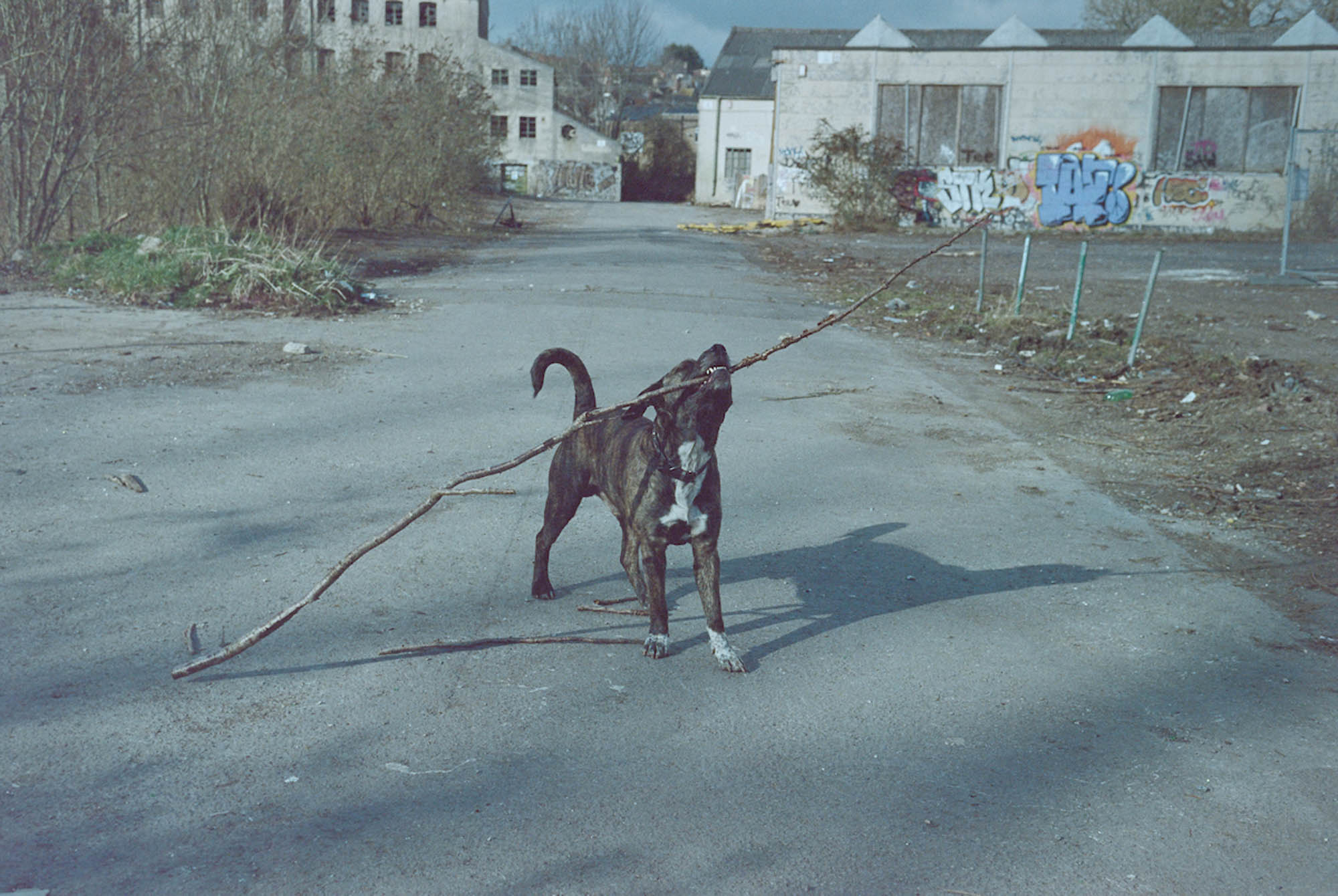 A dog belonging to one of the traveling residents plays with a stick on the morning of eviction. March 2018, Kodak Portra 160NC