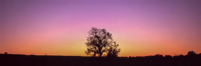 Cottonwood Dream - Fujifilm Velvia 50 (RVP 50)