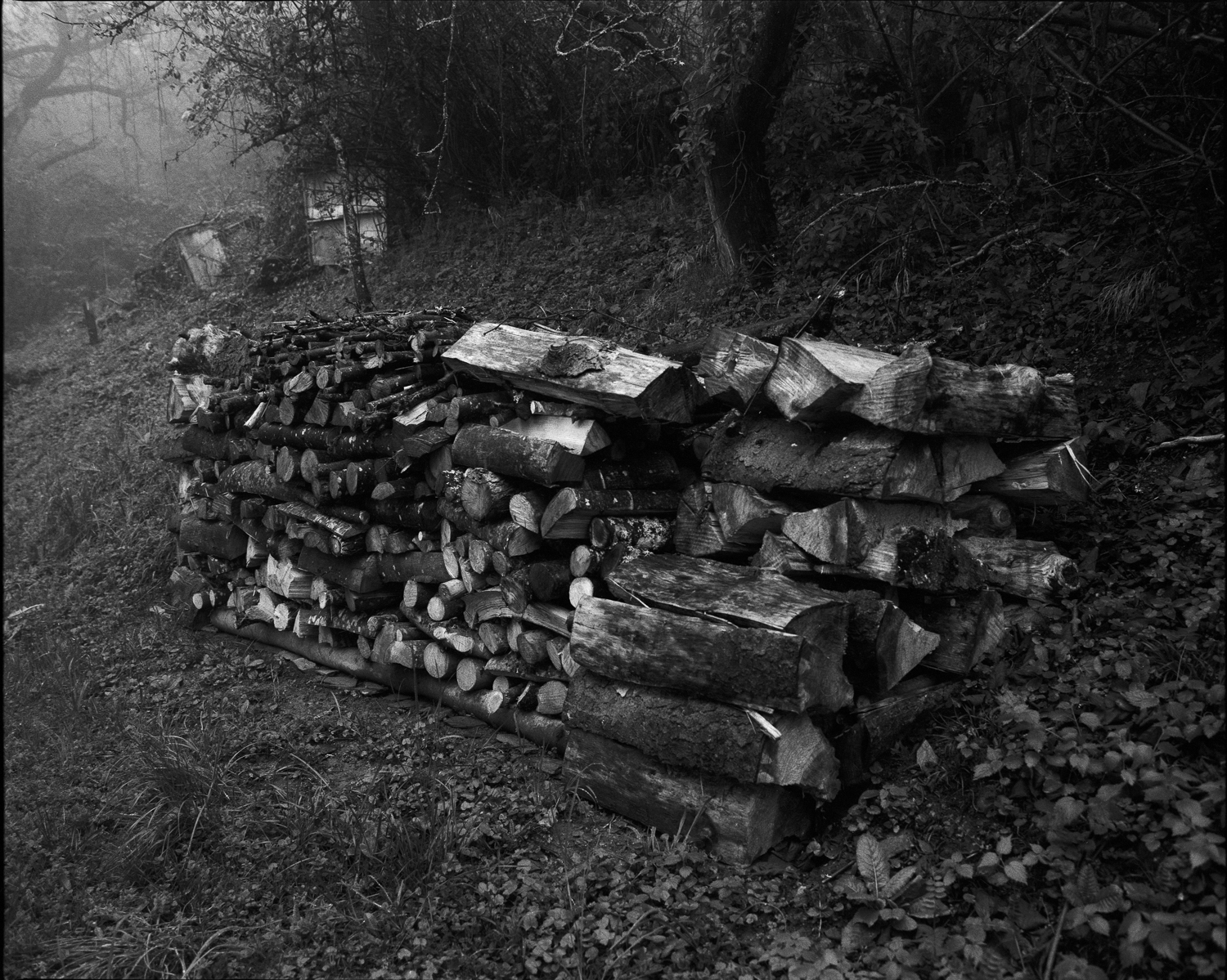 The pile of wood of my neighbor (Savoie)