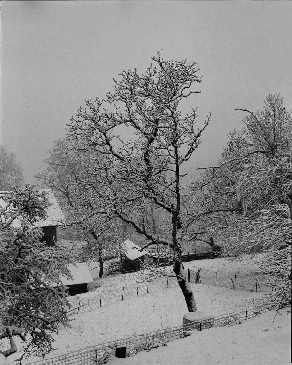 Mamiya RZ69 Pro II + 150mm f/3.5W - Kodak Tri-X 400 - La Table (Savoie)