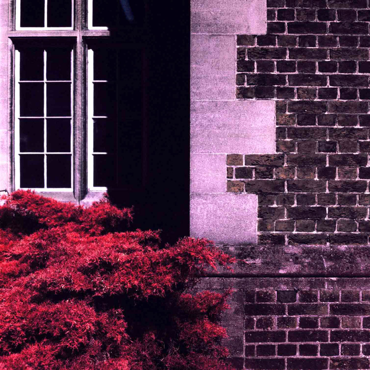 Kodak AEROCHROME III Infrared Film (1443), EI 400, 120 format - Hasselblad 2000FCW, Carl Zeiss Planar T* 80mm f/2.8 F