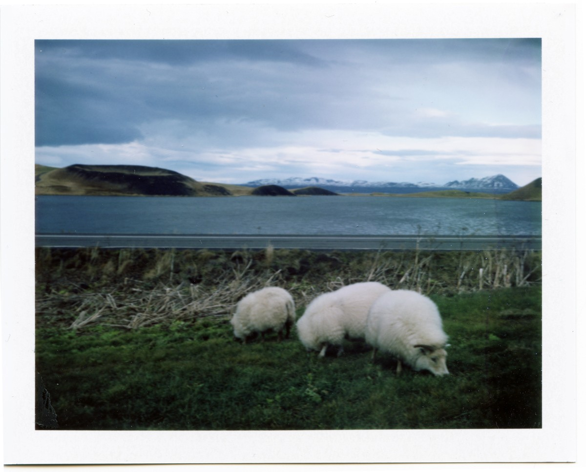 5 Frames With... Fujifilm FP-100C (EI 100 / Packfilm /  Polaroid 340 Land Camera) - by Yevgeny Dyer