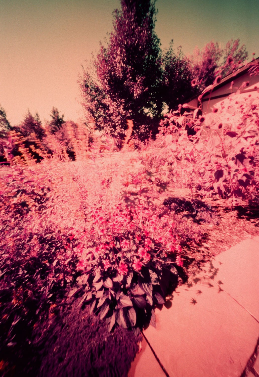 Figure 11 - LomoChrome Purple XR 100-400 - Pinhole (40 seconds)