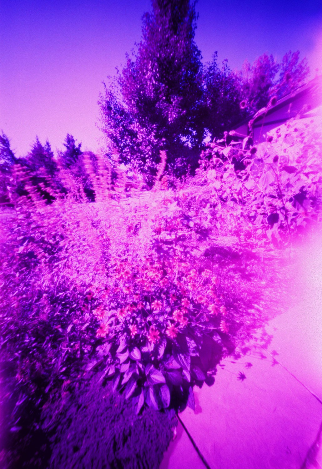 Figure 9 - LomoChrome Purple XR 100-400 - Pinhole (20 seconds)
