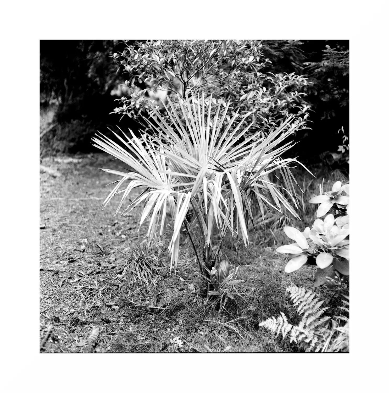 5 Frames With... Kosmo Foto Mono 100 (EI 100 / 120 format / Mamiya C220) - by Matt Thompson