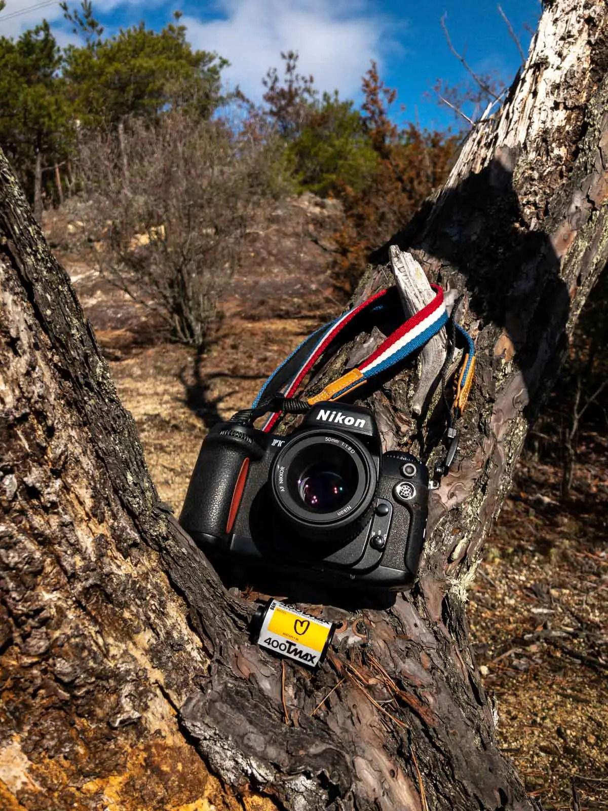 Nikon F100, Nikkor 50mm f/1.8 AF-D and Kodak T-MAX 400