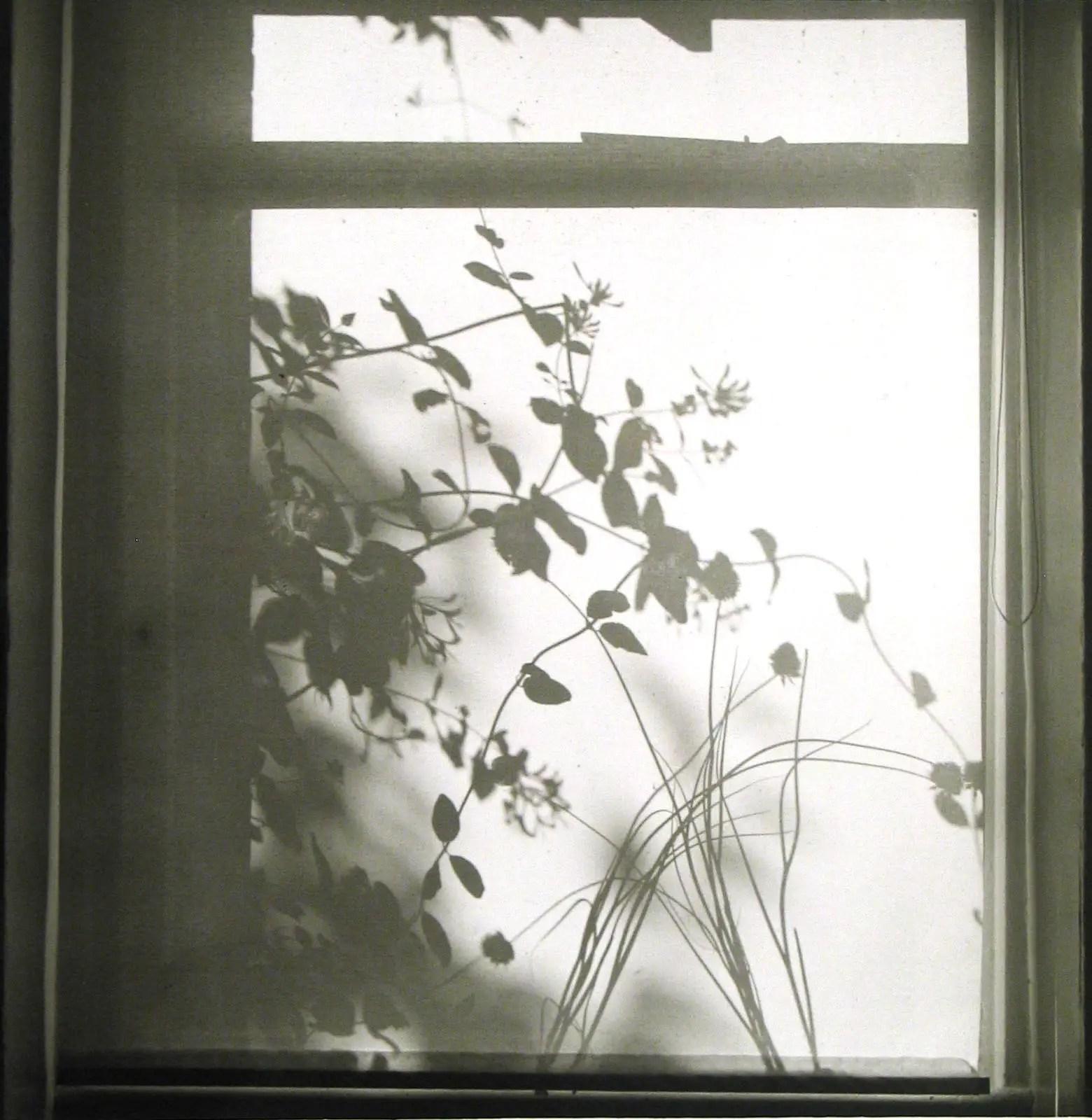 Still life - shadows on blind