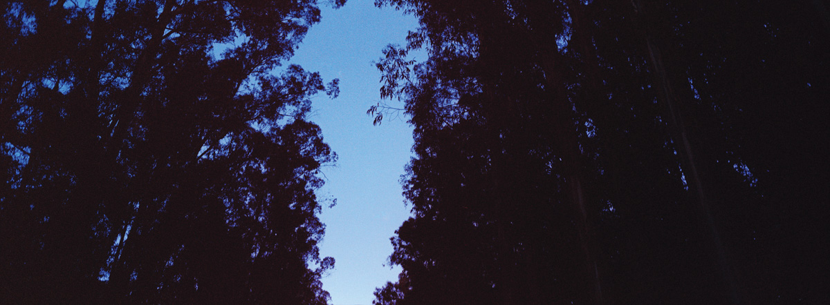 Eucalyptus Grove, U.S. Highway 101, San Benito County, California, October 2009 (Vertigo, 1958). Hasselblad Xpan, Fujinon 45mm/f4, Kodak Vericolor III 160, N+1, f/4 @1/60 sec. Photo by Robert Jones, Copyright © Middlebrow Books, L.L.C., 2019. All Rights Reserved.