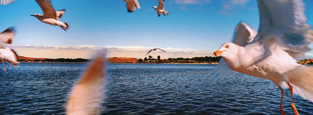 Seagulls at Bodega Bay, California, August 2015 (The Birds, 1963). Hasselblad Xpan, Fujinon 45mm/f4, Kodak Ektar 100, N+1, f/11@1/125 sec (multiple exposures at same settings). Photo by Aimee Sinclair and Robert Jones, Copyright © Middlebrow Books, L.L.C., 2019. All Rights Reserved.
