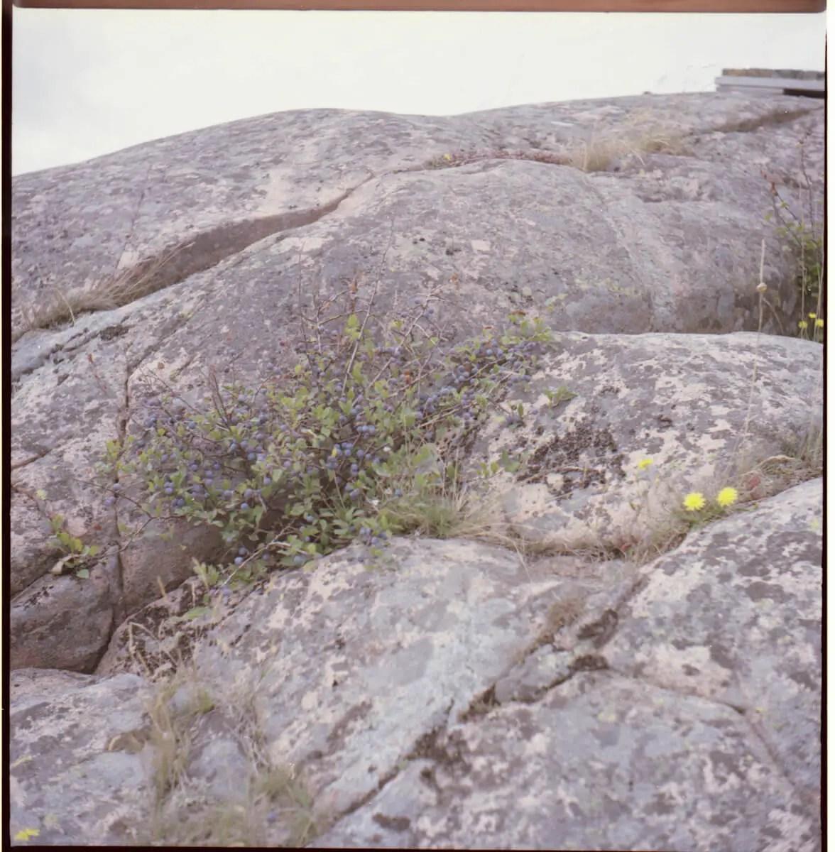 Tobias Eriksson - First roll of 120 film -Kodak Portra 160, Seagull TLR