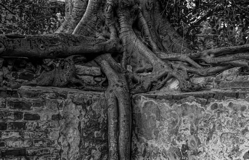 Tree/Wall, Key West, FL - Olympus OM-1n T-Max 400. Shot 1995. Film Processed and scanned 2019.