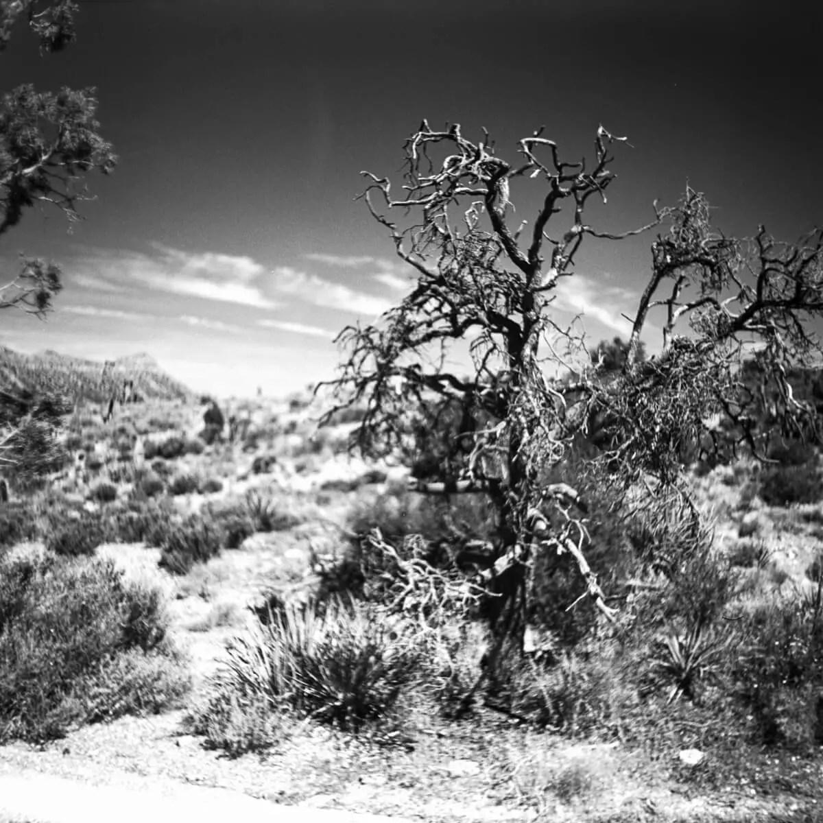 Lovell Canyon - ILFORD Pan F - Certo Six