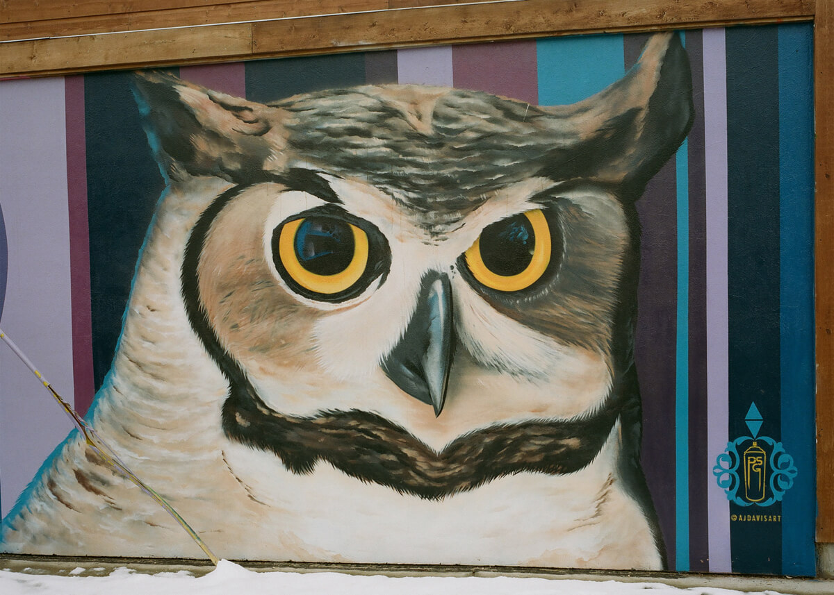 Owl - Kodak Portra 400