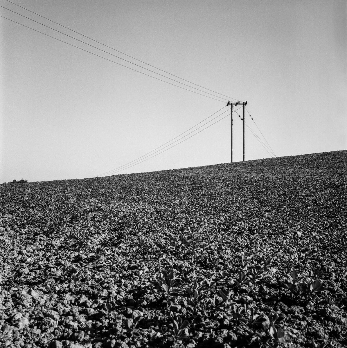 5 Frames... Of ILFORD PAN F PLUS with a little help from Ordnance Survey (120 Format / EI 50 / Yashica Mat-124G) - by Nigel Fishwick