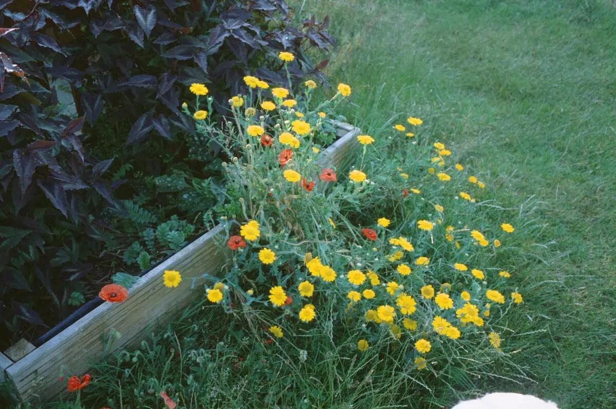 Flowers E6