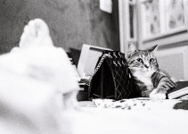 5 Frames… Of Cats that will (apparently) save film forever (4 cameras, 4 films) – by Aivaras Sidla